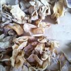 Сушеные грибы древесные, белые Инъер, 500, пр-во Китай